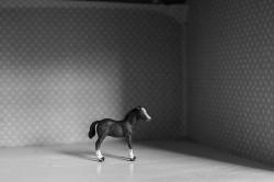 Little horse